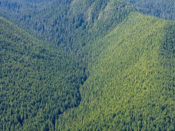 Waldgebiet aus der Vogelperspektive fotografiert